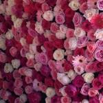 Flower Photocall.