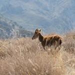 AWOL Granada Mountains (4)