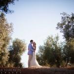 Olive Groves 1