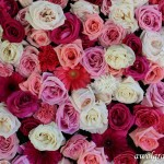 Photocall flower wall