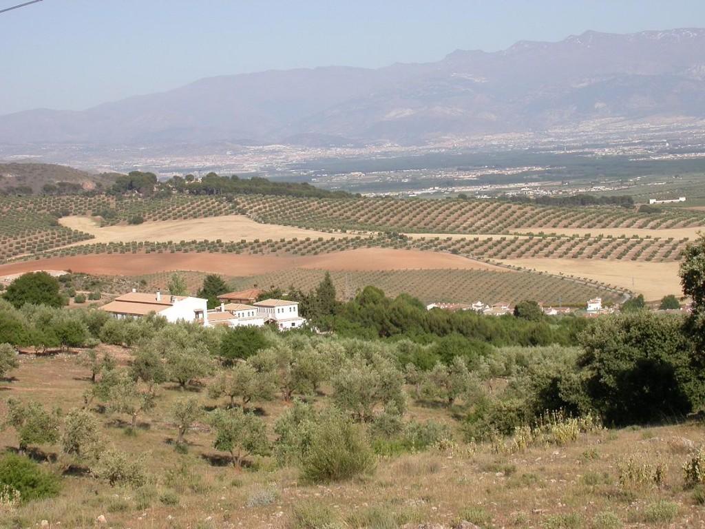 Huerta Nazarí